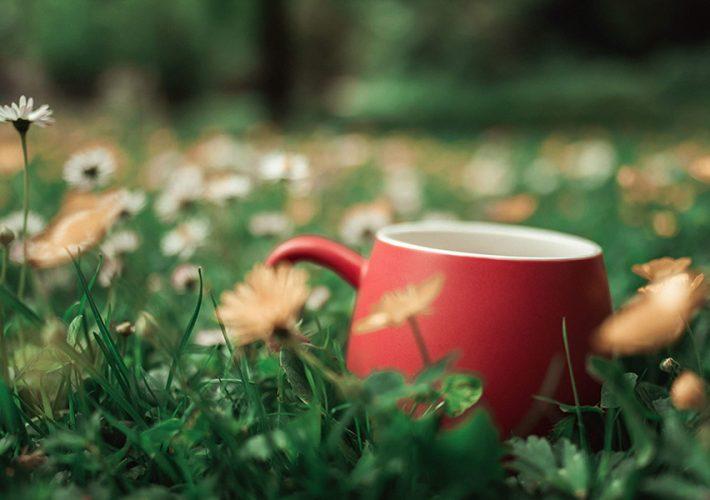 tasse de thé rouge dans l'herbe avec paquerettes