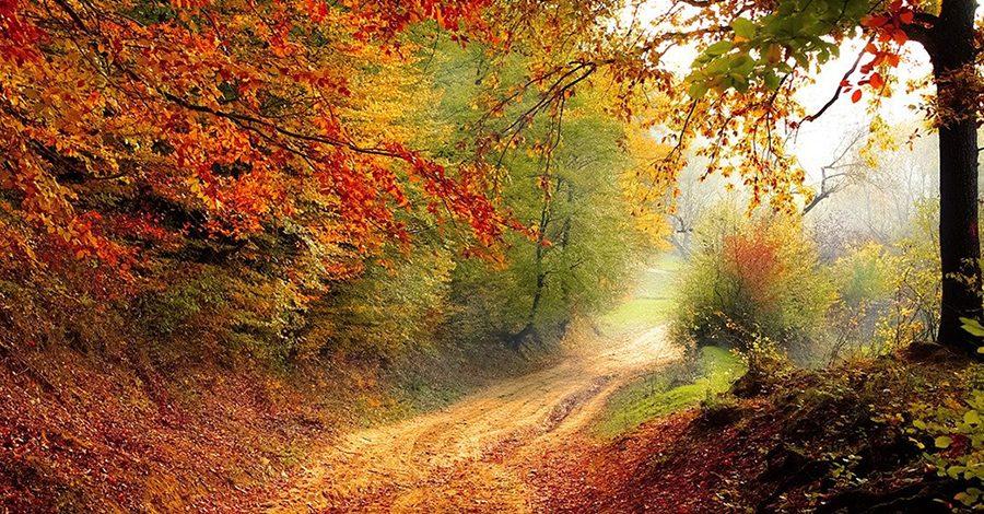chemin en forêt automne