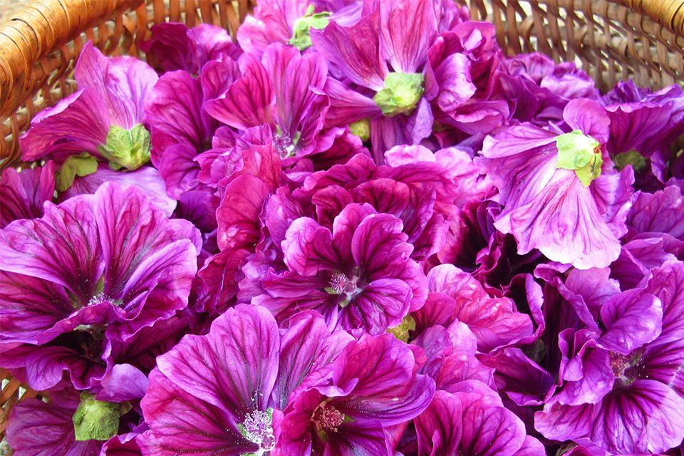 fleurs mauves dans un panier