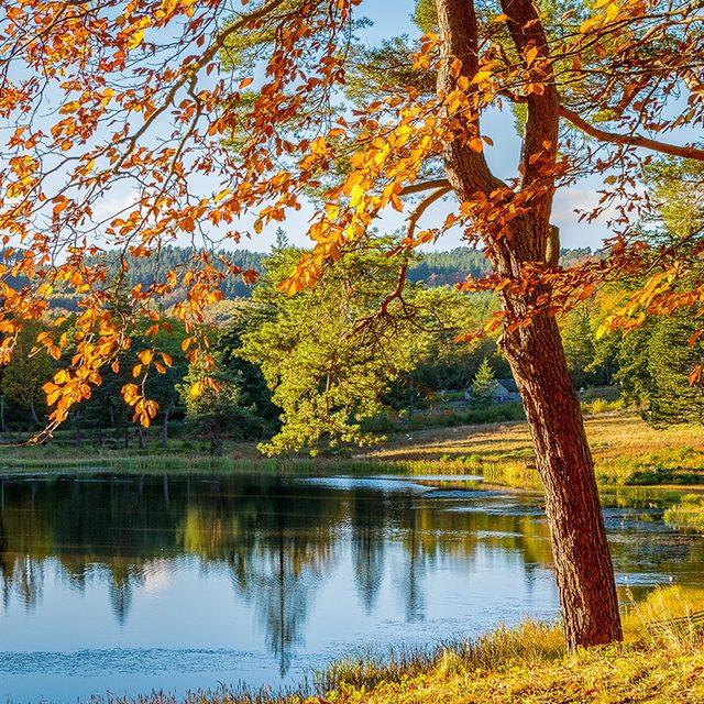 arbre au bord d'un lac en automne