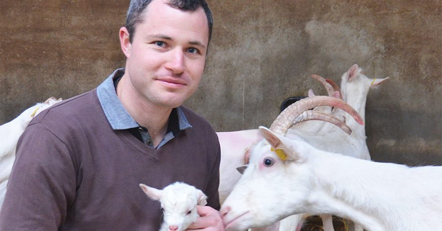 Sébastien Amaltup chèvre et agneau bandeau