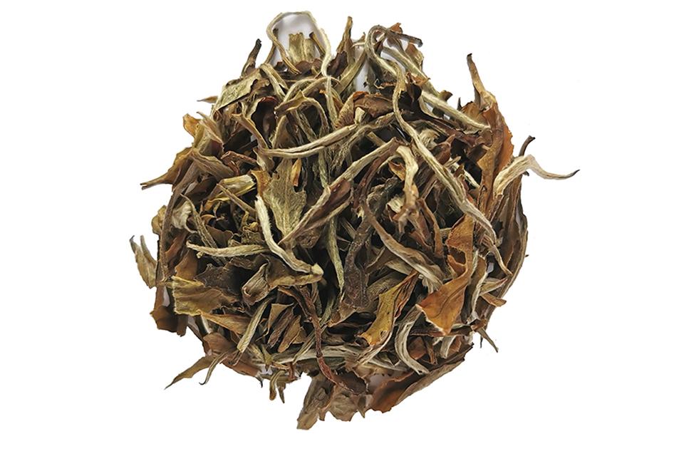 thé blanc les ailes blanches colors of tea